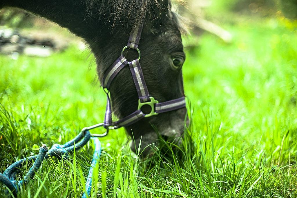 Nie karmcie koni olejem lnianym.  Albo… karmcie. Czyli o związku lipcówki z siemieniem i nie tylko.